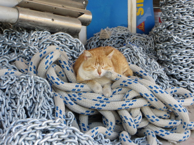 Feral cat, one of the many that roam Marmaris, naps in front of chandlery