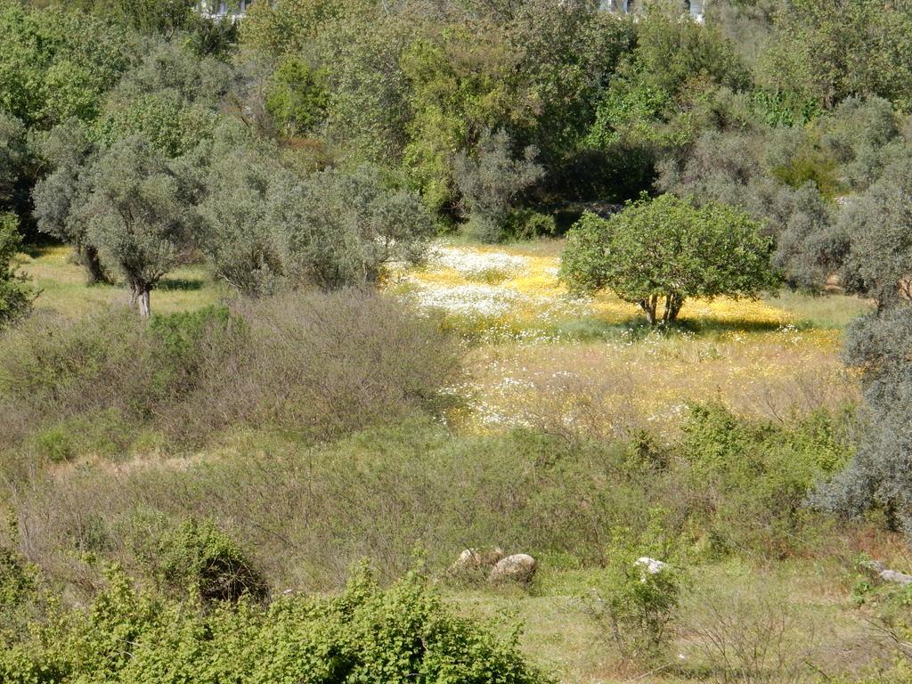 View in the Orhaniye valley