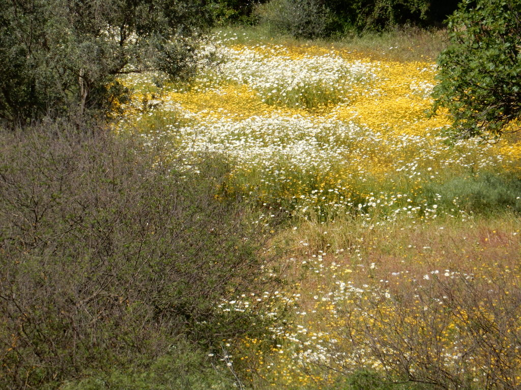 Wildflowers fill a field