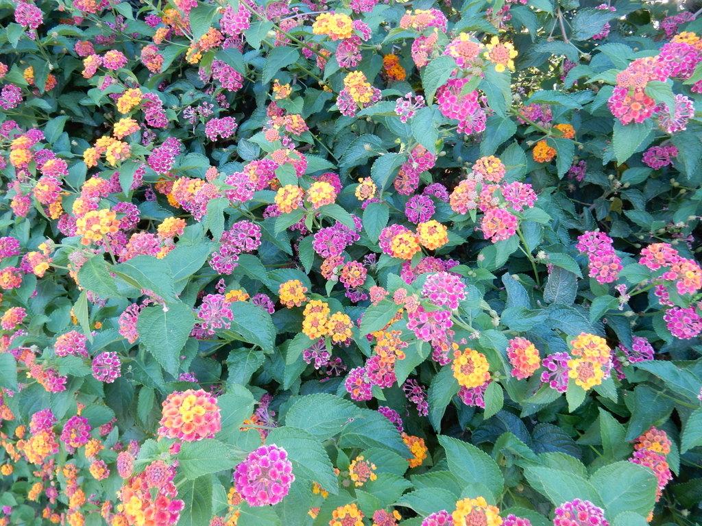 Flowers in the public garden, Cagliari