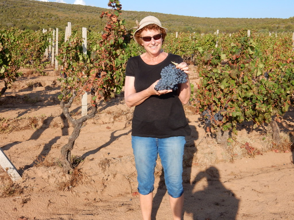 Laura poses with wine grapes on the path above Cala dei Franesi, Sardinia